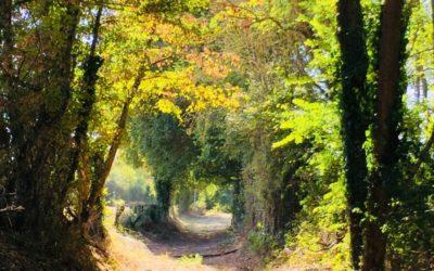 Bien vivre l'automne avec la sophrologie