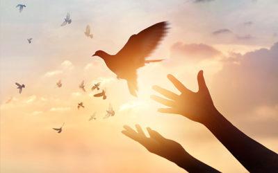 S'alléger ; se pardonner et pardonner